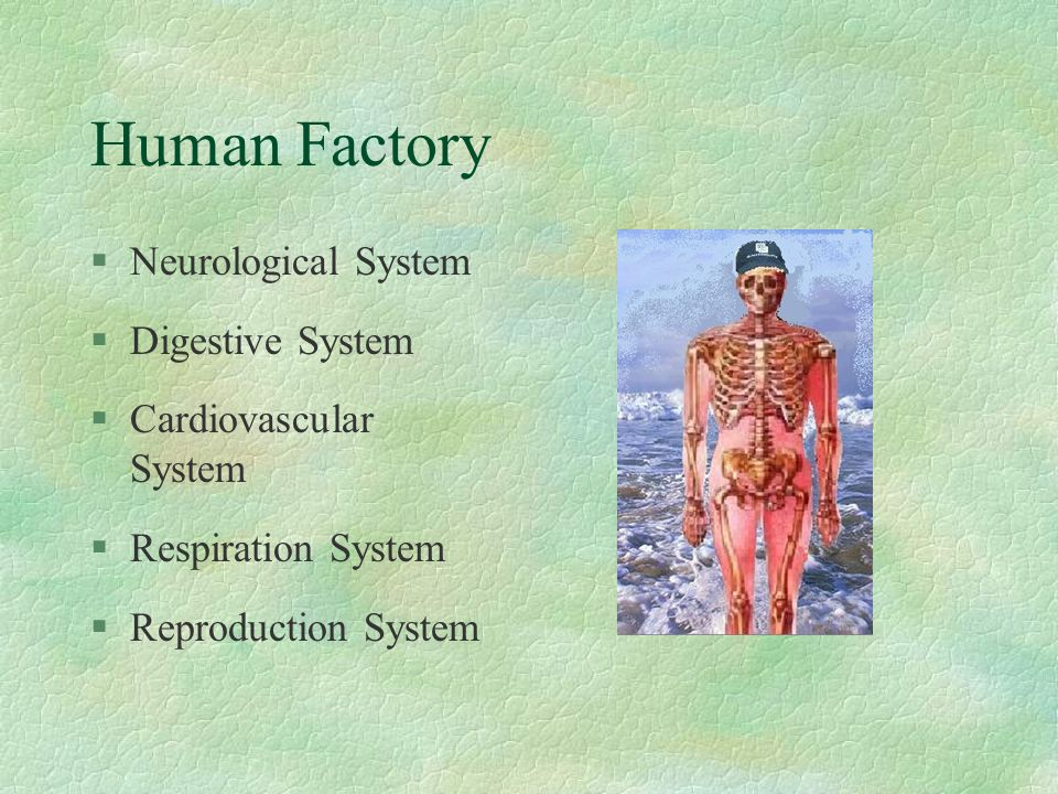 Main Objective §Food §Water §Air §Reproduction The main objective of the Human Factory is to survive !!!