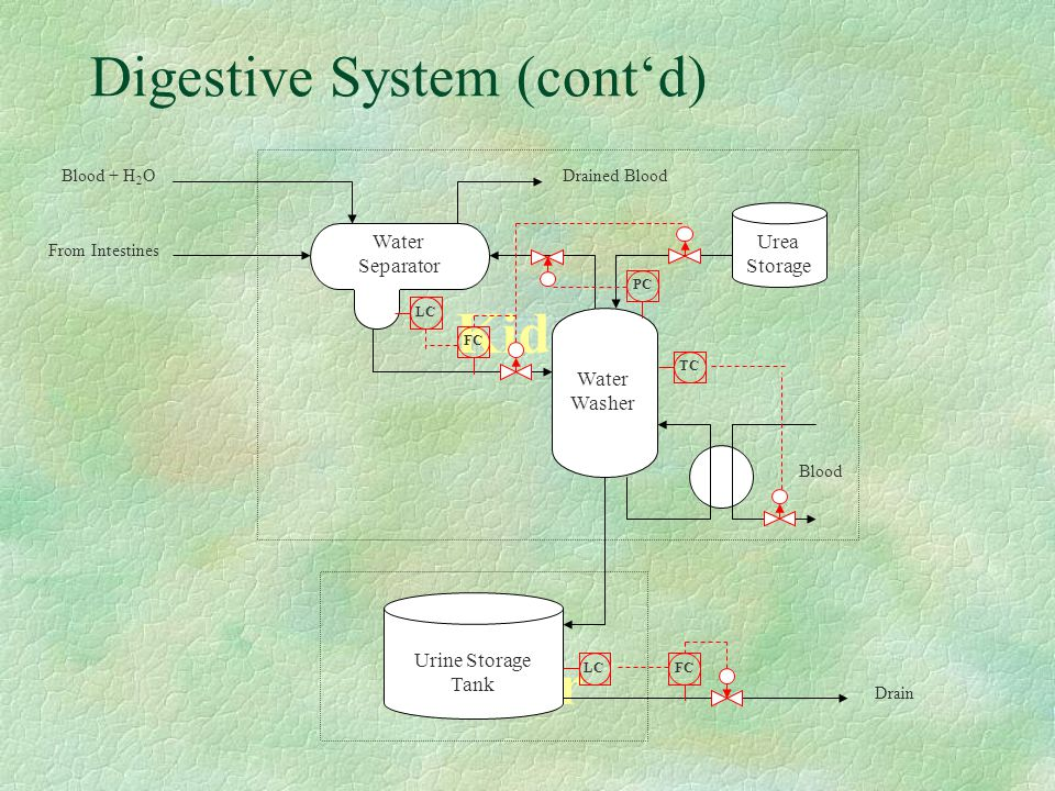 Digestive System (cont'd) Kidneys Urea Bladder Urine Storage Tank Drain Water Separator Urea Storage From Intestines Blood + H 2 ODrained Blood Blood Water Washer LZA