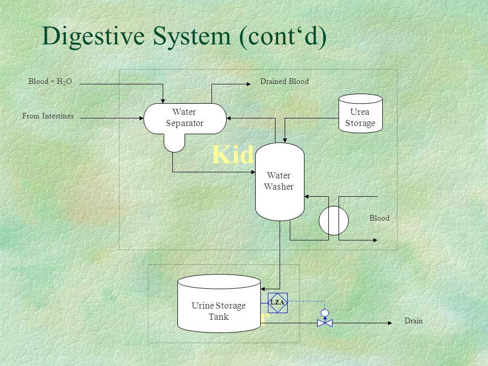 Digestive System (cont'd) Kidneys Urea Bladder Urine Storage Tank Drain Water Separator Urea Storage From Intestines Blood + H 2 ODrained Blood Blood