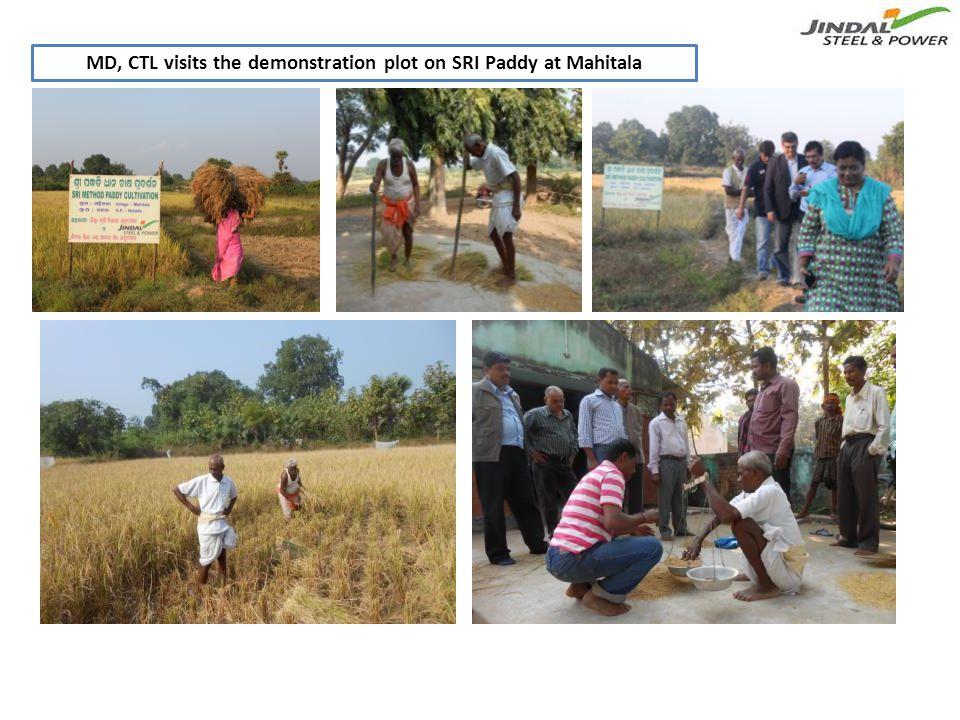 MD, CTL visits the demonstration plot on SRI Paddy at Mahitala
