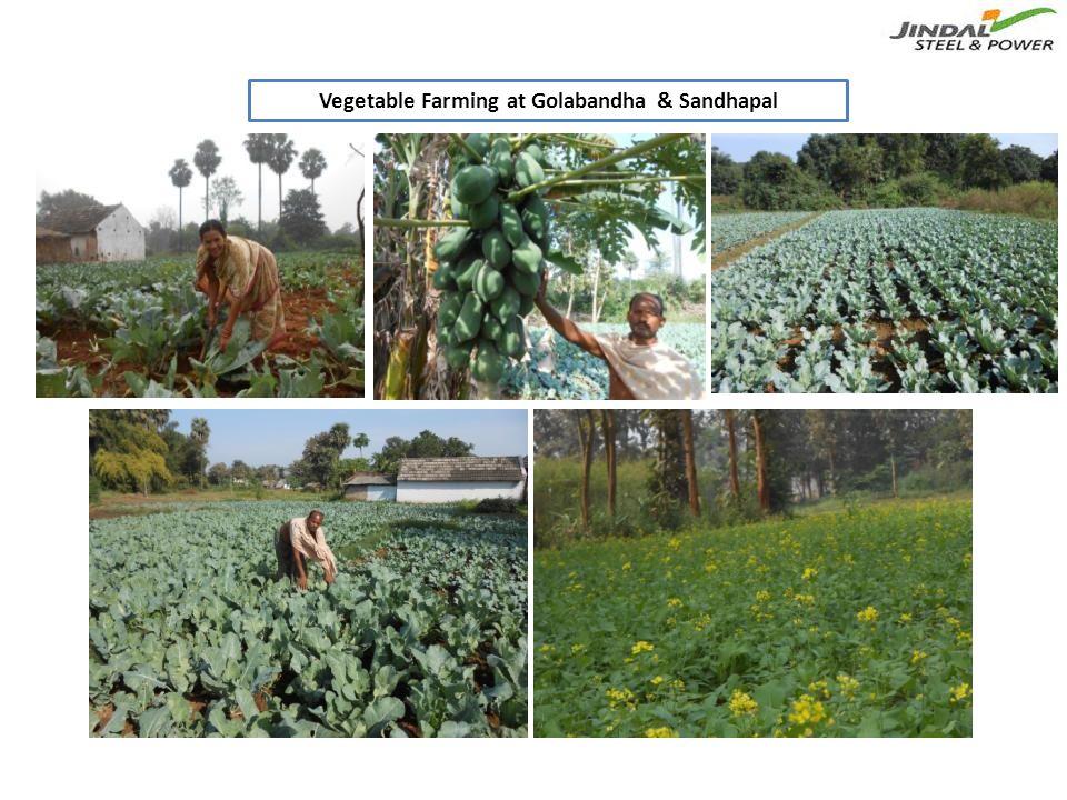 Vegetable Farming at Golabandha & Sandhapal