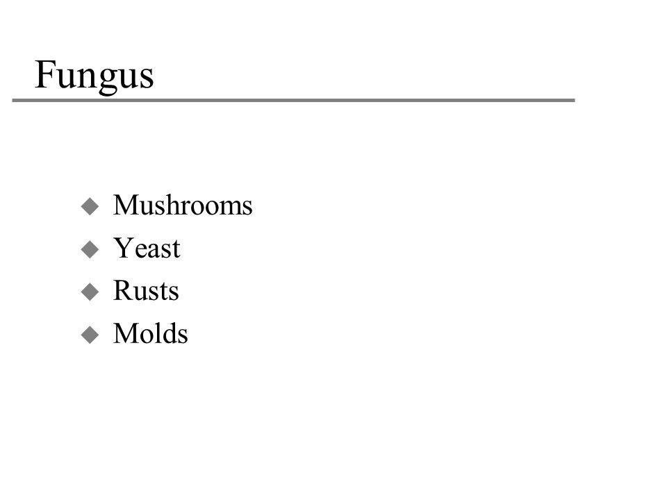 Fungus  Mushrooms  Yeast  Rusts  Molds
