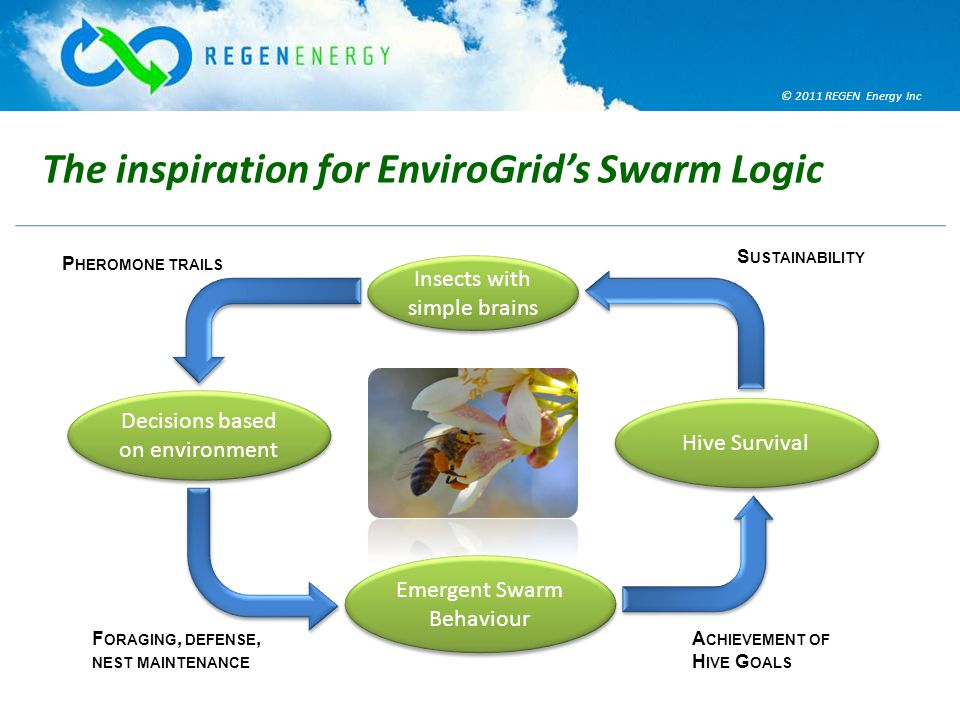 © 2011 REGEN Energy Inc The inspiration for EnviroGrid's Swarm Logic Insects with simple brains Decisions based on environment Emergent Swarm Behaviour Hive Survival P HEROMONE TRAILS F ORAGING, DEFENSE, NEST MAINTENANCE A CHIEVEMENT OF H IVE G OALS S USTAINABILITY