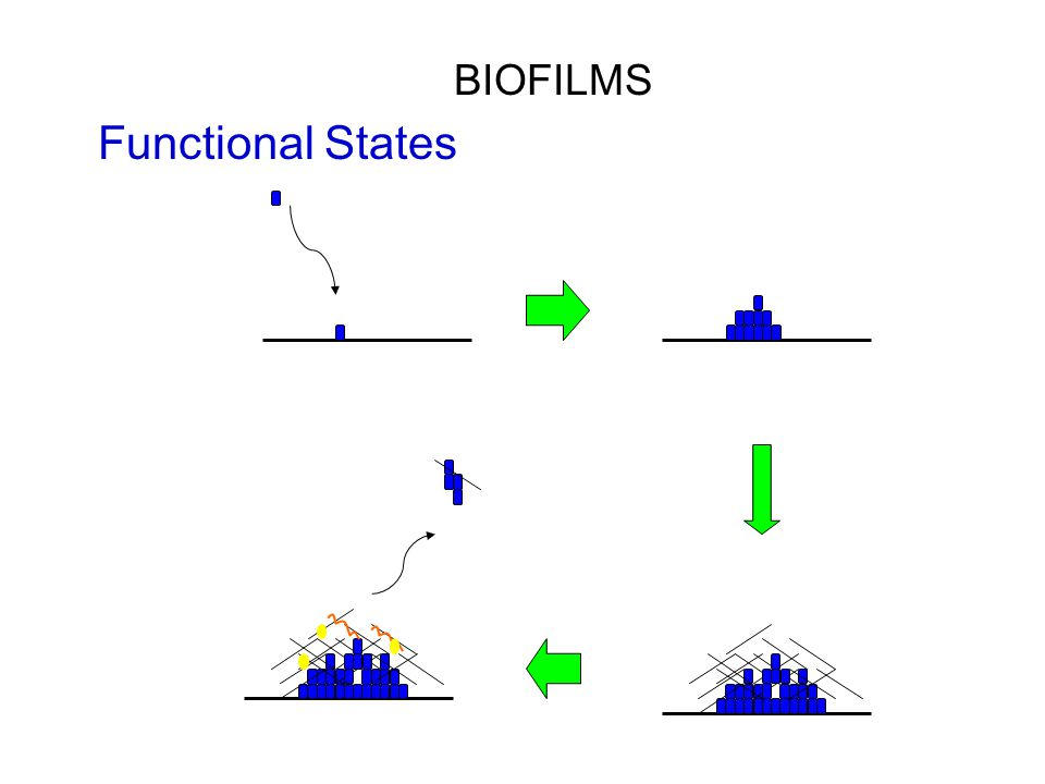 BIOFILMS Functional States
