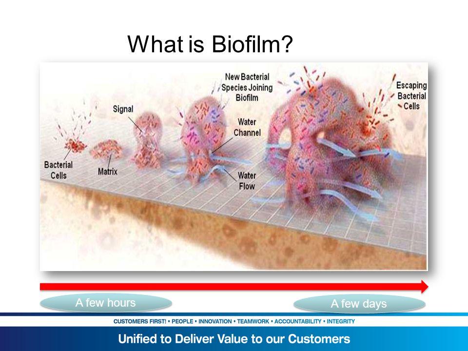 What is Biofilm? A few hours A few days