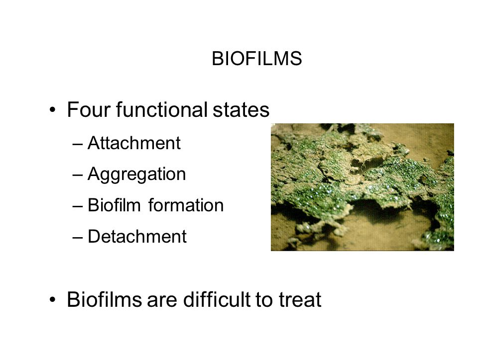BIOFILMS Four functional states –Attachment –Aggregation –Biofilm formation –Detachment Biofilms are difficult to treat