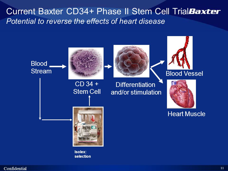 11 Confidential Isolex: selection CD 34 + Stem Cell Differentiation and/or stimulation Blood Vessel Heart Muscle Blood Stream Current Baxter CD34+ Phase II Stem Cell Trial Potential to reverse the effects of heart disease