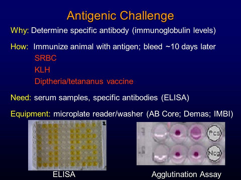 Antigenic Challenge Why: Determine specific antibody (immunoglobulin levels) How: Immunize animal with antigen; bleed ~10 days later SRBC KLH Diptheria/tetananus vaccine Need: serum samples, specific antibodies (ELISA) Equipment: microplate reader/washer (AB Core; Demas; IMBI) ELISA Agglutination Assay