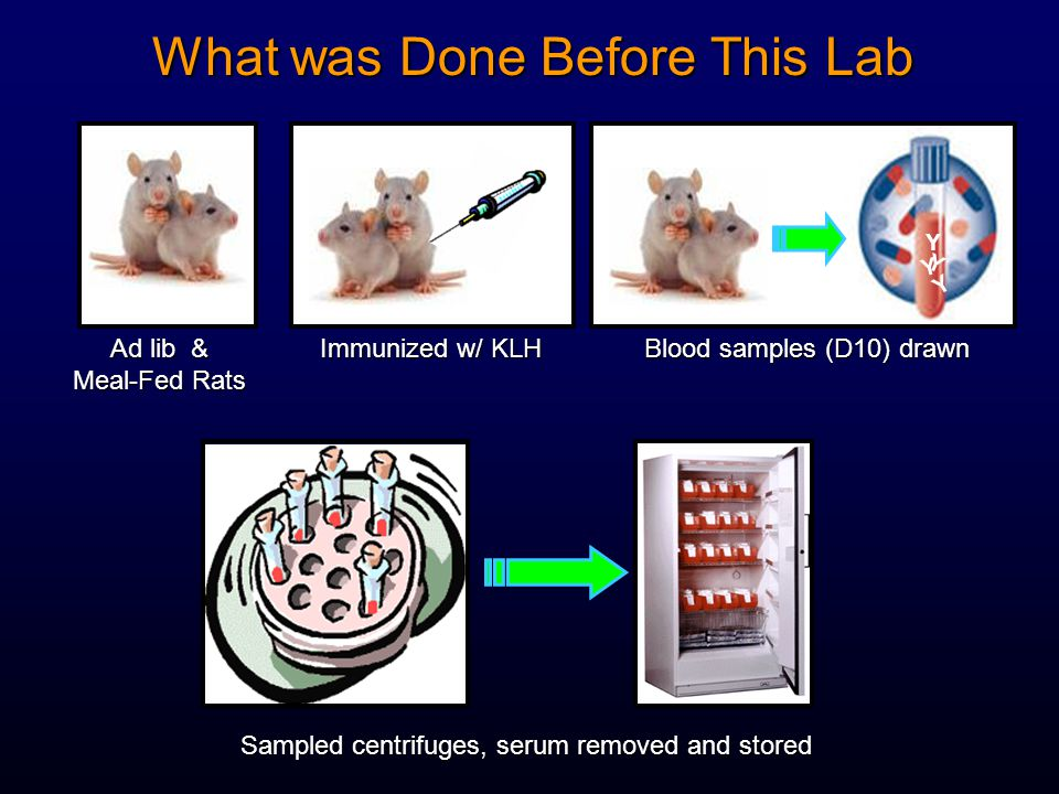 What was Done Before This Lab Y Y Y Y Ad lib & Meal-Fed Rats Immunized w/ KLH Blood samples (D10) drawn Sampled centrifuges, serum removed and stored
