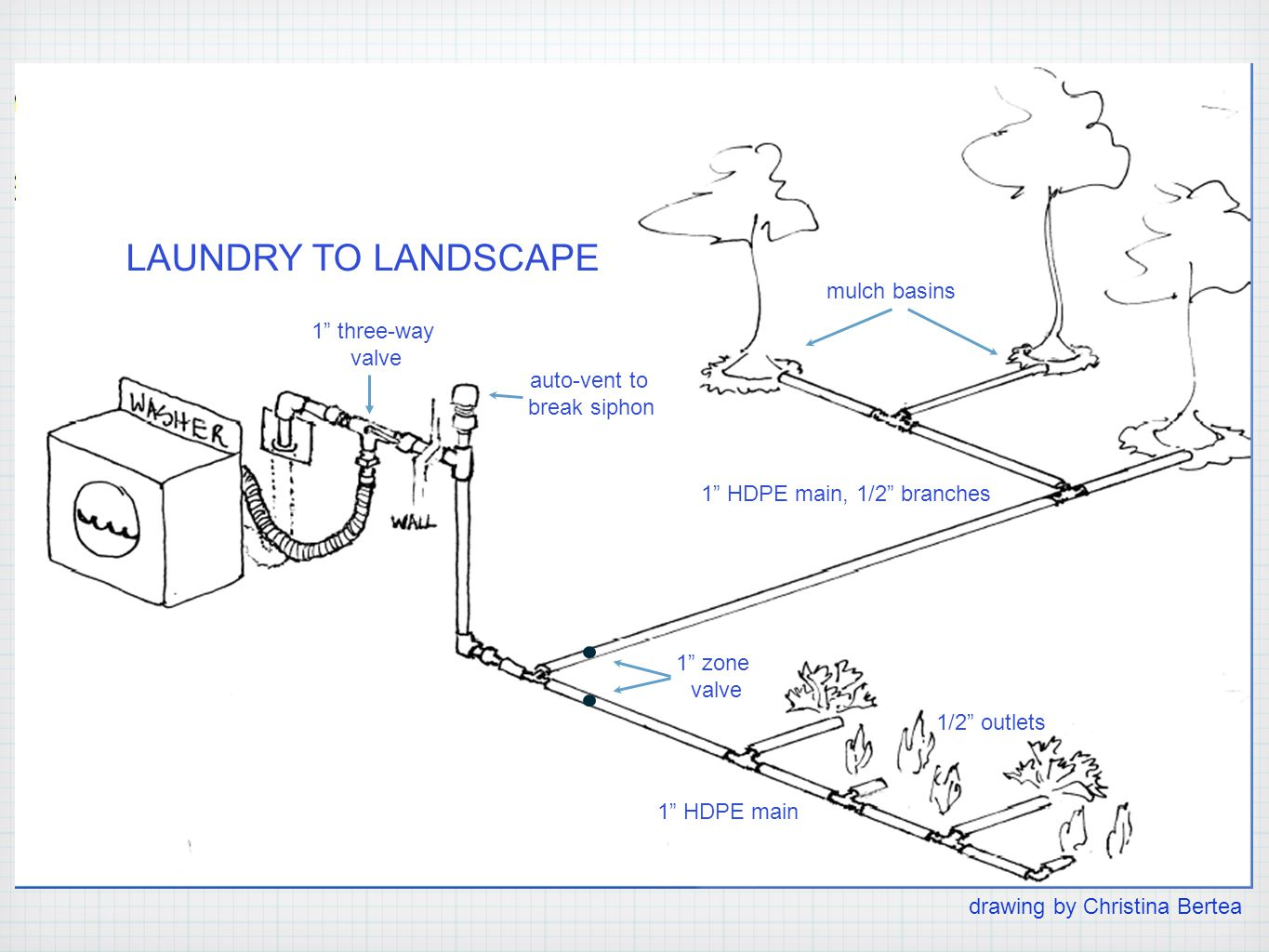 1 zone valve 1/2 outlets 1 HDPE main 1 HDPE main, 1/2 branches auto-vent to break siphon 1 three-way valve LAUNDRY TO LANDSCAPE mulch basins drawing by Christina Bertea