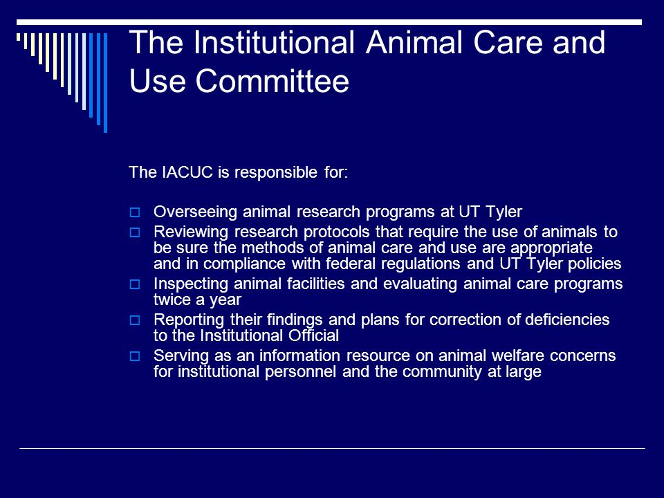 The Institutional Animal Care and Use Committee The IACUC is responsible for:  Overseeing animal research programs at UT Tyler  Reviewing research p