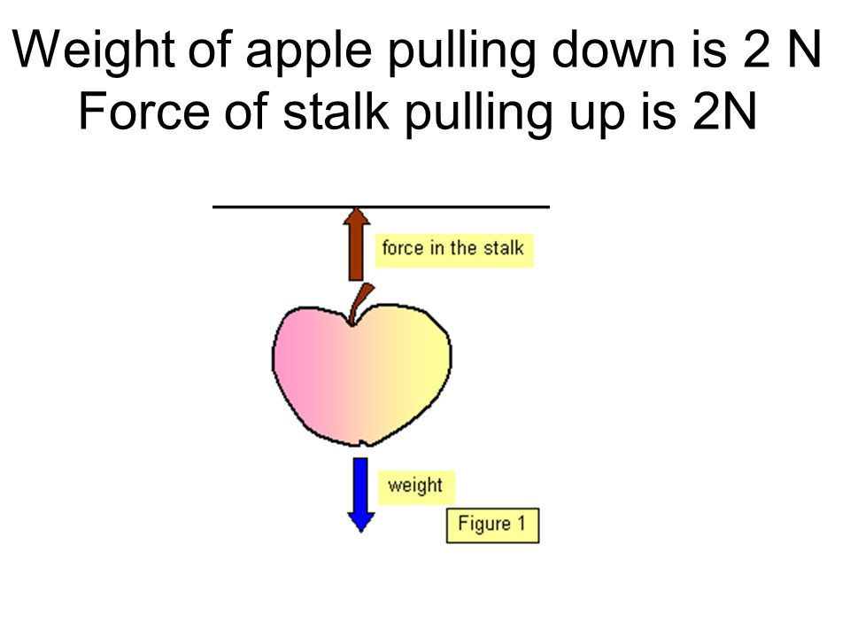 Weight of apple pulling down is 2 N Force of stalk pulling up is 2N
