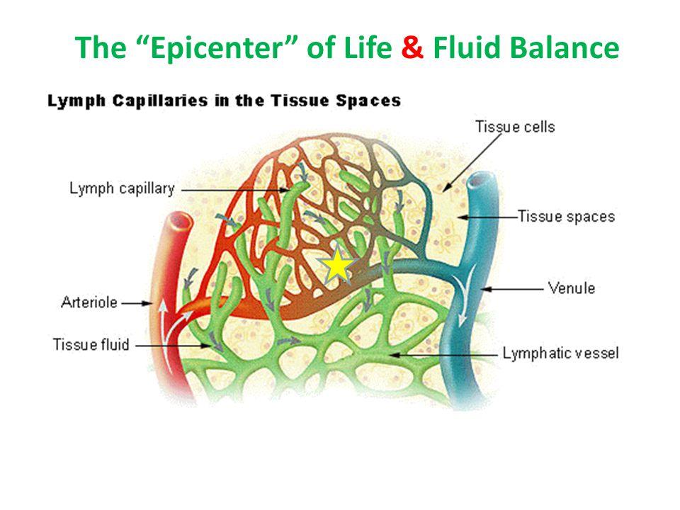 "The ""Epicenter"" of Life & Fluid Balance"