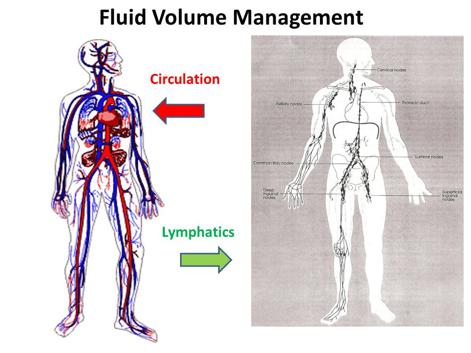 Circulation Lymphatics Fluid Volume Management