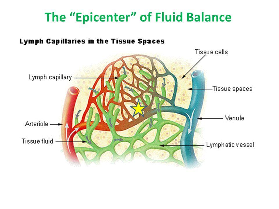 "The ""Epicenter"" of Fluid Balance"