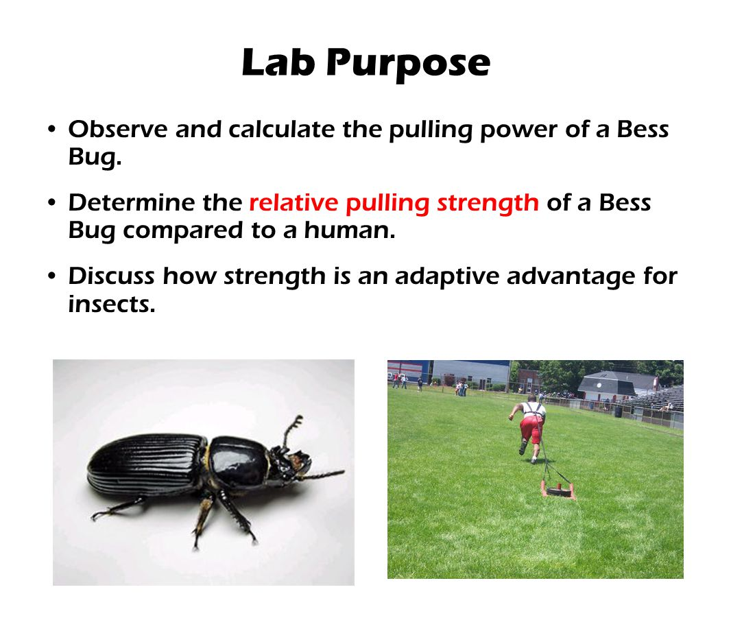 Lab Purpose Observe and calculate the pulling power of a Bess Bug. Determine the relative pulling strength of a Bess Bug compared to a human. Discuss