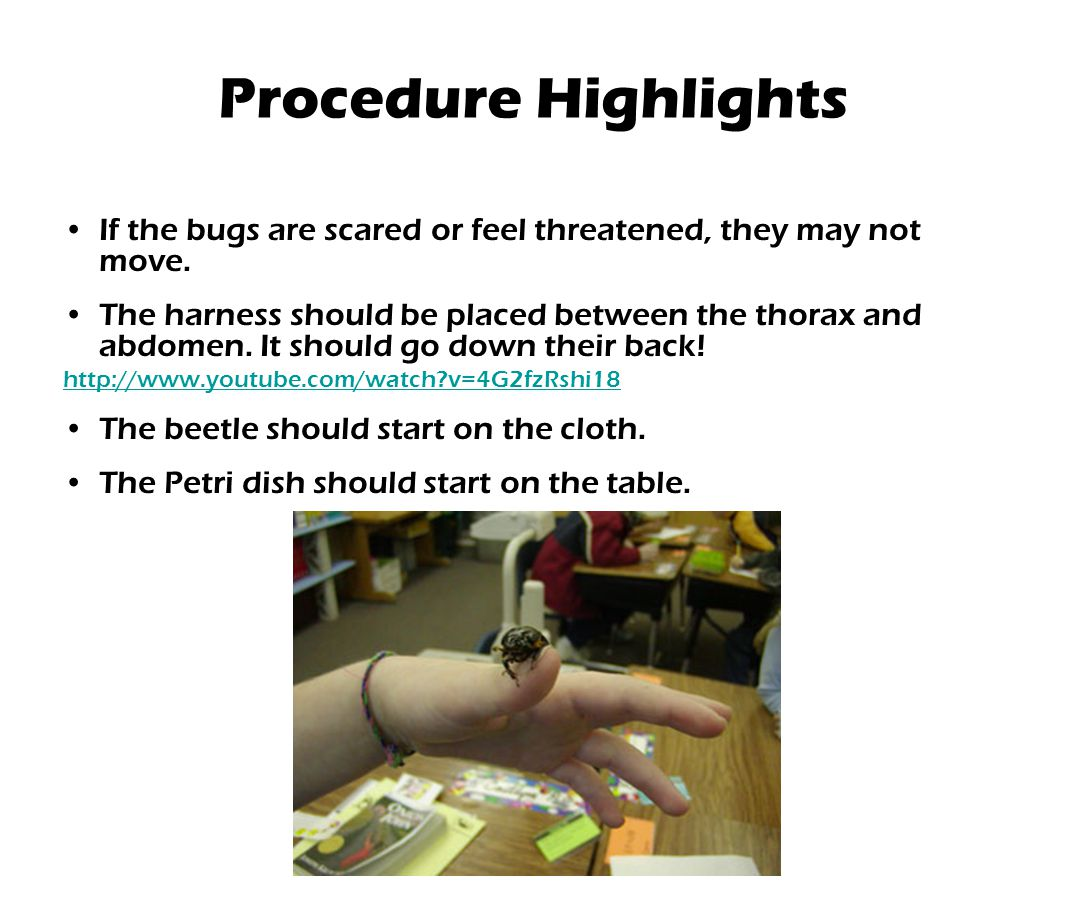 If the bugs are scared or feel threatened, they may not move. The harness should be placed between the thorax and abdomen. It should go down their bac