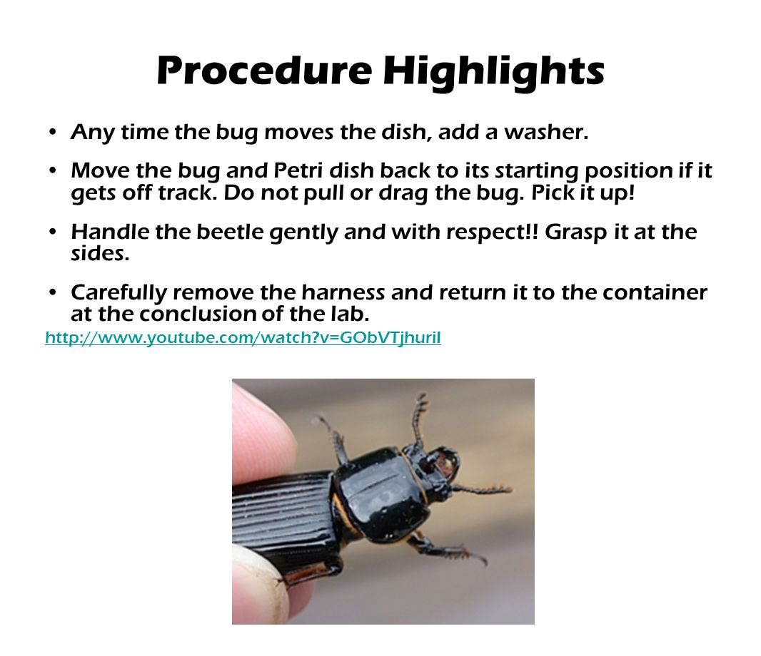 Any time the bug moves the dish, add a washer. Move the bug and Petri dish back to its starting position if it gets off track. Do not pull or drag the