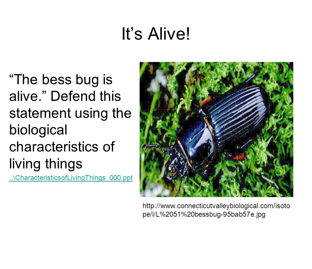 """It's Alive! """"The bess bug is alive."""" Defend this statement using the biological characteristics of living things..\CharacteristicsofLivingThings_000.p"""