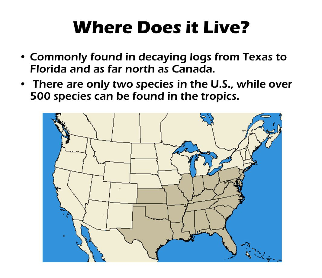 Where Does it Live? Commonly found in decaying logs from Texas to Florida and as far north as Canada. There are only two species in the U.S., while ov