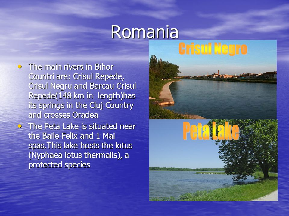 Romania The main rivers in Bihor Countri are: Crisul Repede, Crisul Negru and Barcau Crisul Repede(148 km in length)has its springs in the Cluj Country and crosses Oradea The main rivers in Bihor Countri are: Crisul Repede, Crisul Negru and Barcau Crisul Repede(148 km in length)has its springs in the Cluj Country and crosses Oradea The Peta Lake is situated near the Baile Felix and 1 Mai spas.This lake hosts the lotus (Nyphaea lotus thermalis), a protected species The Peta Lake is situated near the Baile Felix and 1 Mai spas.This lake hosts the lotus (Nyphaea lotus thermalis), a protected species