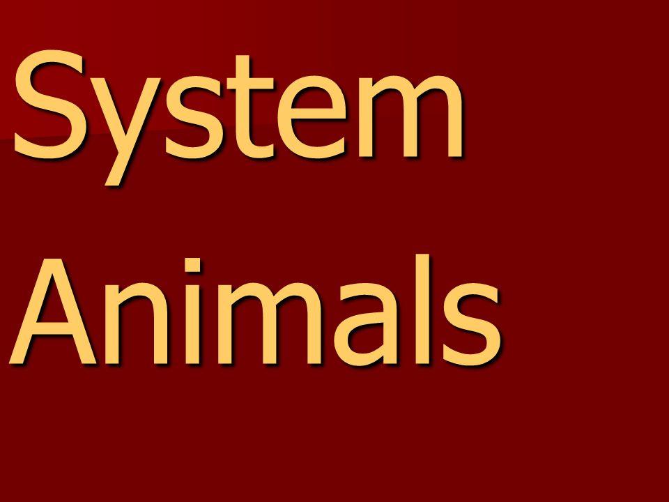 SystemAnimals