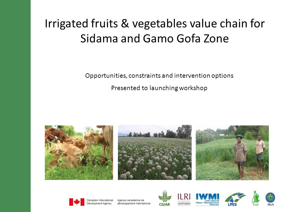 Irrigated fruits & vegetables value chain for Sidama and Gamo Gofa Zone Opportunities, constraints and intervention options Presented to launching wor