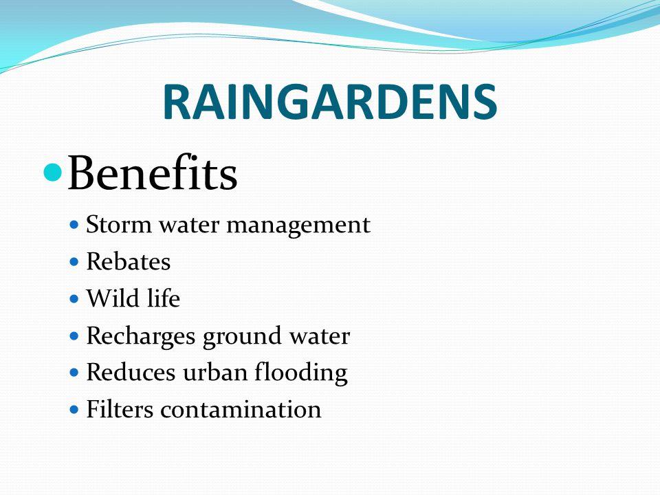 RAINGARDENS Benefits Storm water management Rebates Wild life Recharges ground water Reduces urban flooding Filters contamination