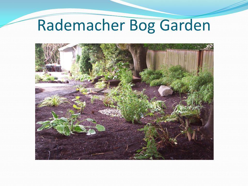 Rademacher Bog Garden