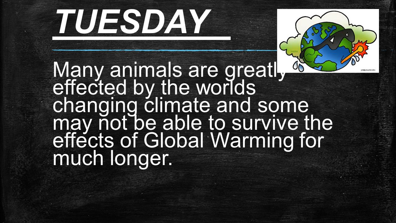 TUESDAY Many animals are greatly effected by the worlds changing climate and some may not be able to survive the effects of Global Warming for much longer.