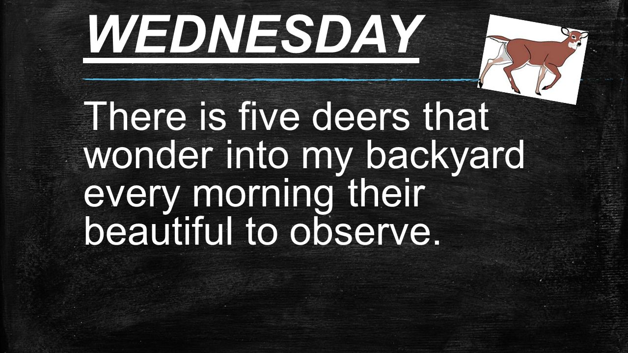 WEDNESDAY There is five deers that wonder into my backyard every morning their beautiful to observe.