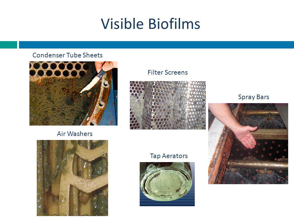 Visible Biofilms Spray Bars Air Washers Filter Screens Tap Aerators Condenser Tube Sheets
