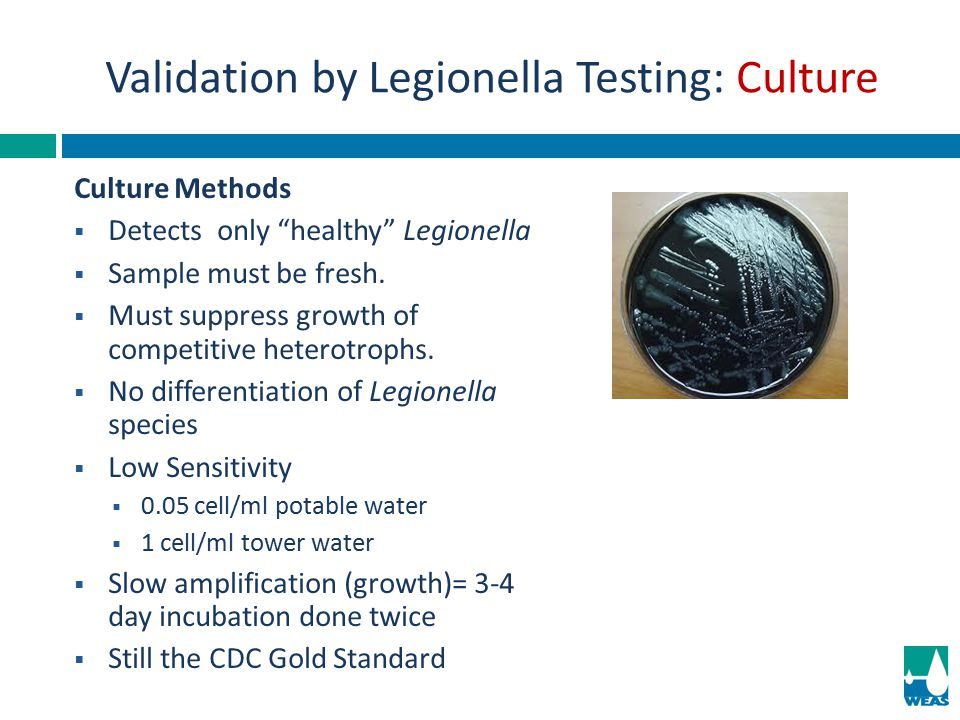 """Culture Methods DDetects only """"healthy"""" Legionella SSample must be fresh. MMust suppress growth of competitive heterotrophs. NNo differentiati"""