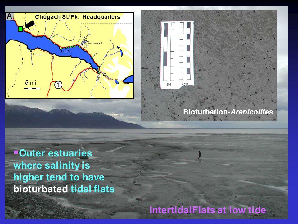 Bioturbation-Arenicolites IntertidalFlats at low tide 5 mi A 1 Chugach St. Pk. Headquarters Hope Girdwood Bird Pt.  Outer estuaries where salinity is
