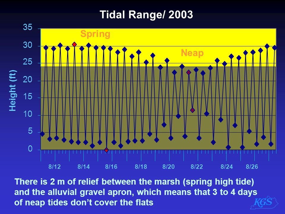 Tidal Range/ 2003 0 5 10 15 20 25 30 35 Height (ft) 8/128/148/168/188/208/228/248/26 Spring Neap There is 2 m of relief between the marsh (spring high