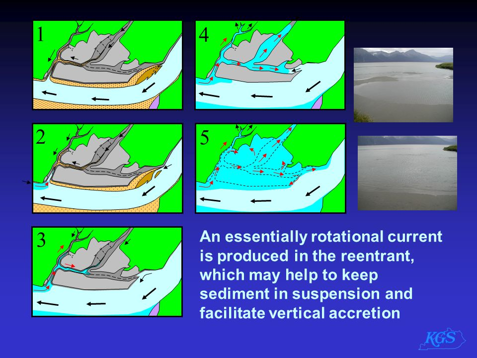1 2 3 4 5 An essentially rotational current is produced in the reentrant, which may help to keep sediment in suspension and facilitate vertical accret