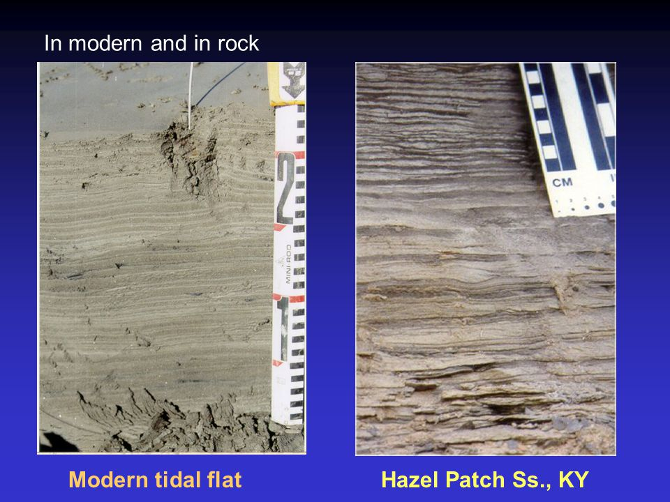 Modern tidal flatHazel Patch Ss., KY In modern and in rock