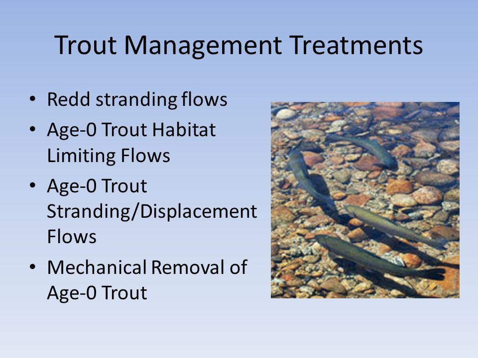 Trout Management Treatments Redd stranding flows Age-0 Trout Habitat Limiting Flows Age-0 Trout Stranding/Displacement Flows Mechanical Removal of Age-0 Trout