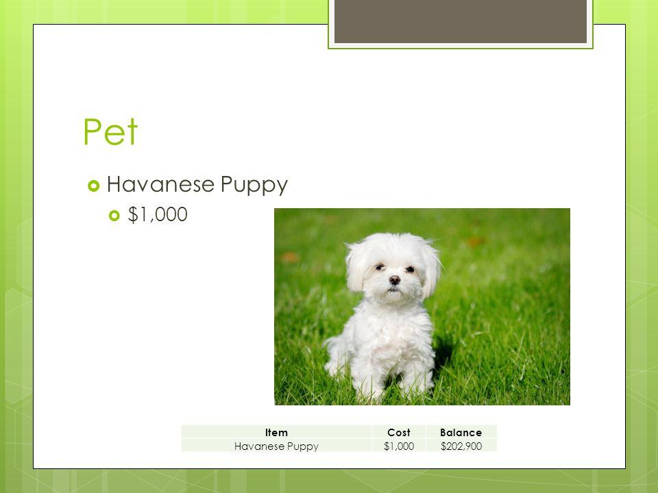 Pet  Havanese Puppy  $1,000 ItemCostBalance Havanese Puppy$1,000$202,900
