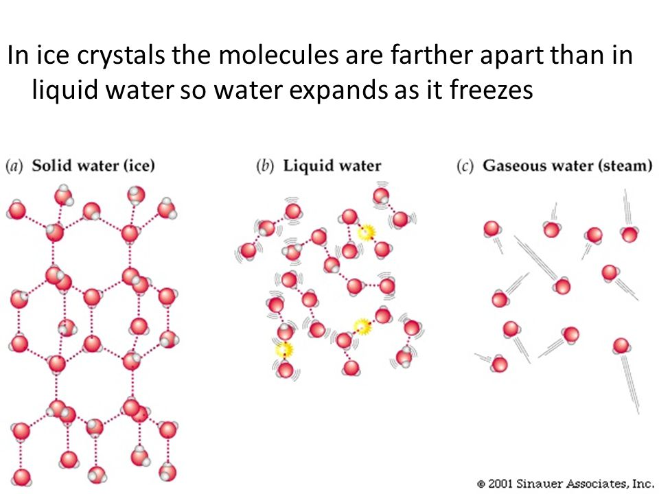 In ice crystals the molecules are farther apart than in liquid water so water expands as it freezes