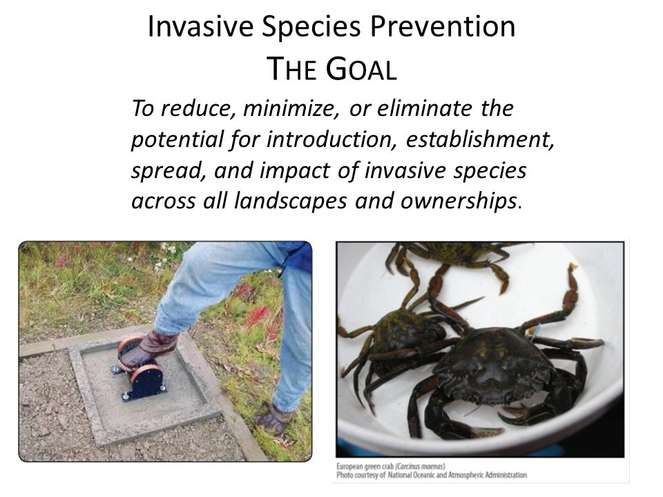 Invasive Species Prevention T HE G OAL To reduce, minimize, or eliminate the potential for introduction, establishment, spread, and impact of invasive species across all landscapes and ownerships.