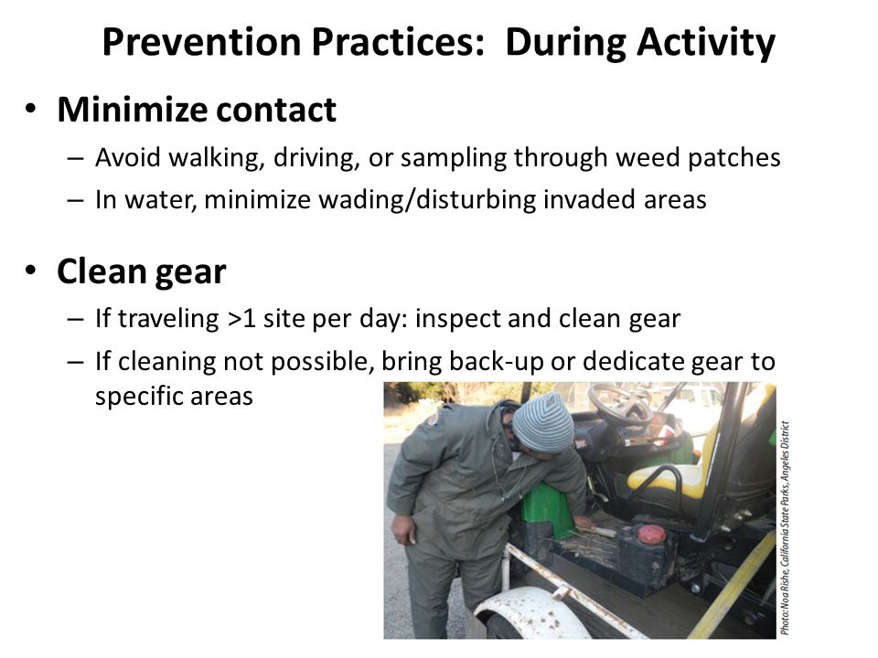 Minimize contact – Avoid walking, driving, or sampling through weed patches – In water, minimize wading/disturbing invaded areas Clean gear – If traveling >1 site per day: inspect and clean gear – If cleaning not possible, bring back-up or dedicate gear to specific areas Prevention Practices: During Activity