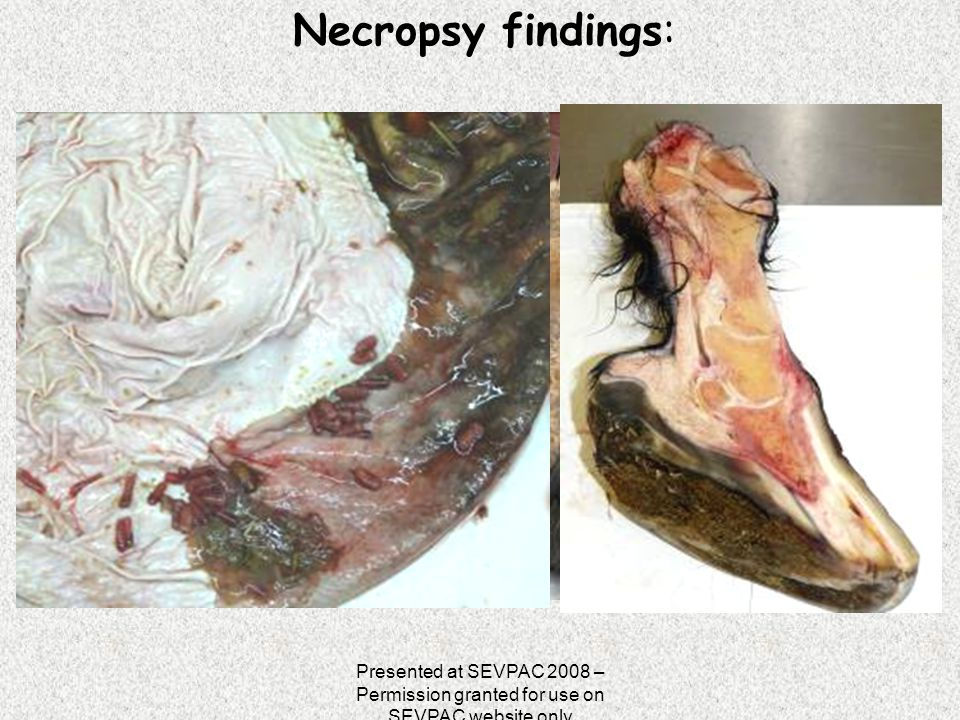 Necropsy findings: Presented at SEVPAC 2008 – Permission granted for use on SEVPAC website only