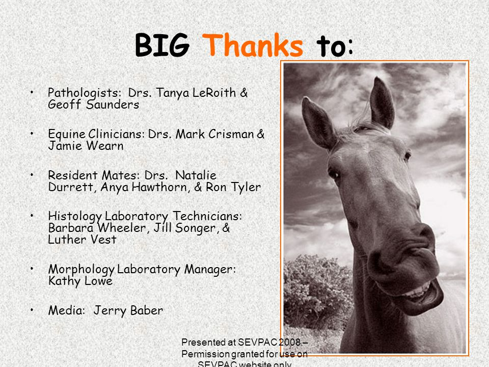 BIG Thanks to: Pathologists: Drs. Tanya LeRoith & Geoff Saunders Equine Clinicians: Drs. Mark Crisman & Jamie Wearn Resident Mates: Drs. Natalie Durre