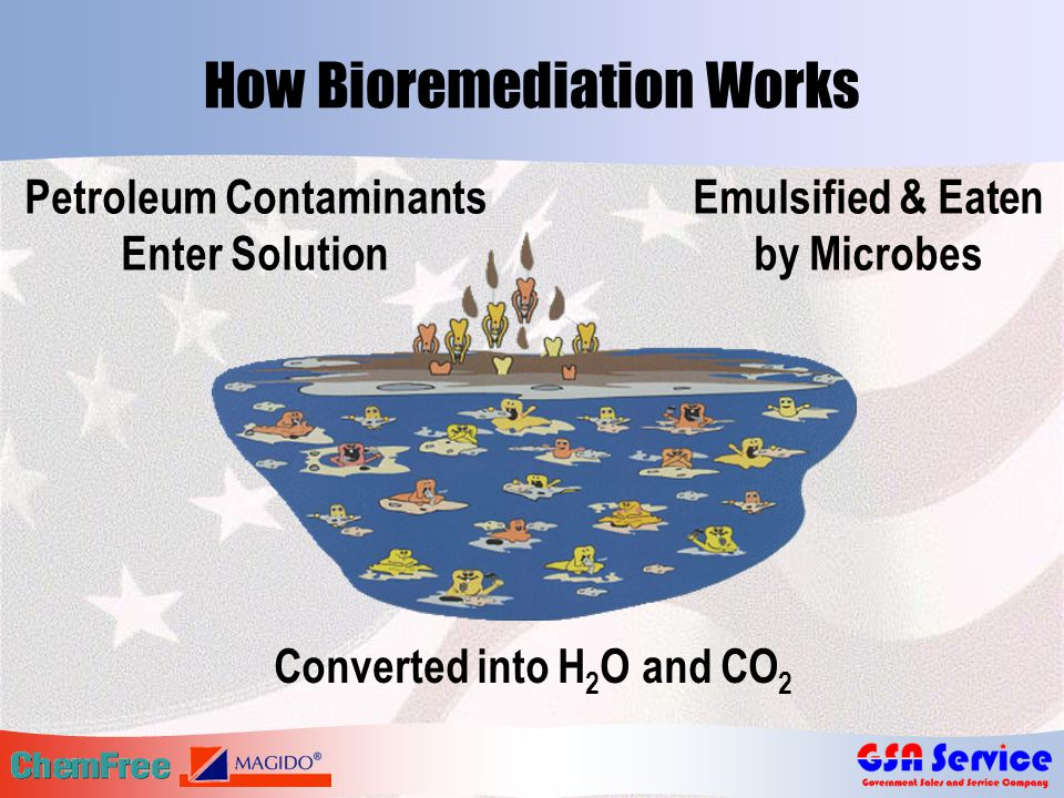 How Bioremediation Works Converted into H 2 O and CO 2 Petroleum Contaminants Enter Solution Emulsified & Eaten by Microbes
