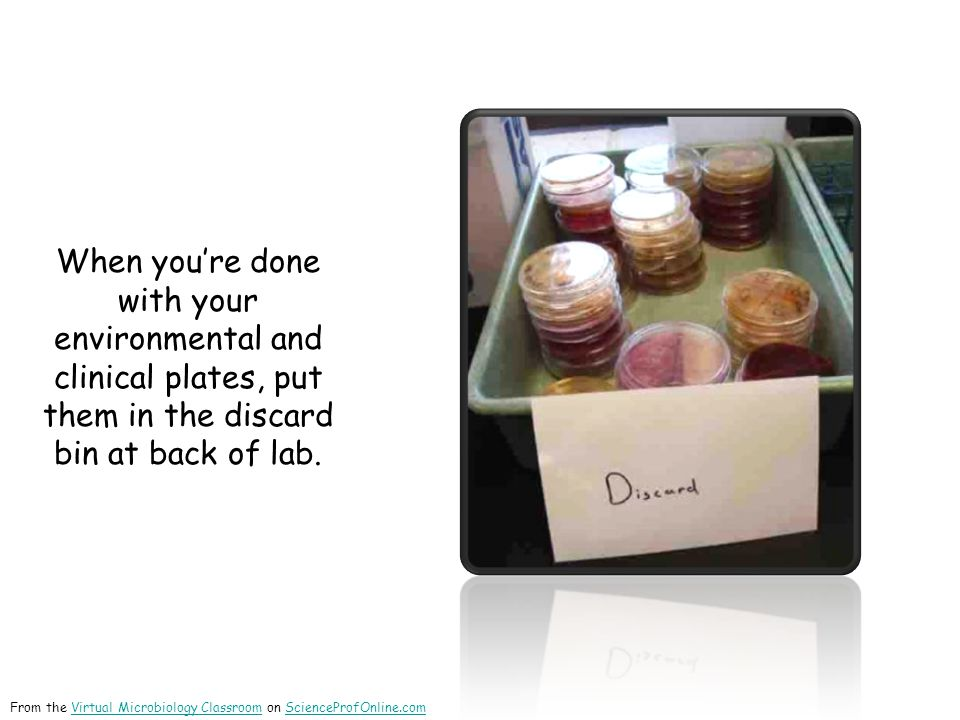 When you're done with your environmental and clinical plates, put them in the discard bin at back of lab. From the Virtual Microbiology Classroom on S