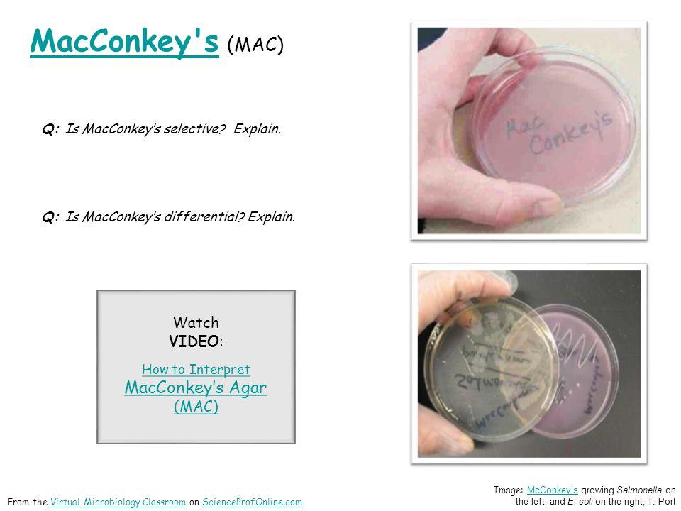 MacConkey s MacConkey s (MAC) Q: Is MacConkey's selective.