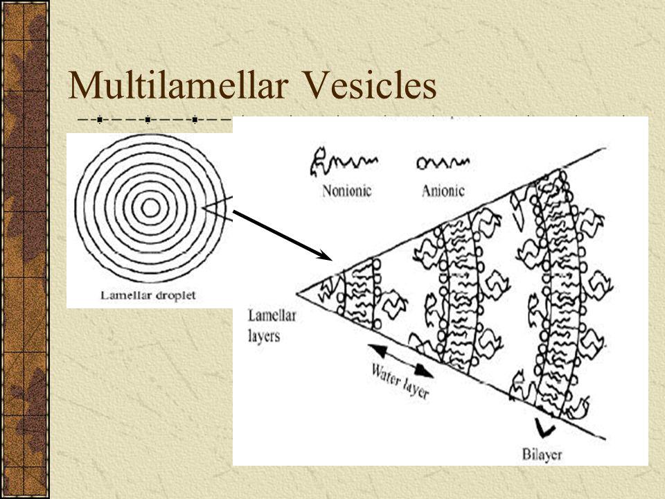 Multilamellar Vesicles