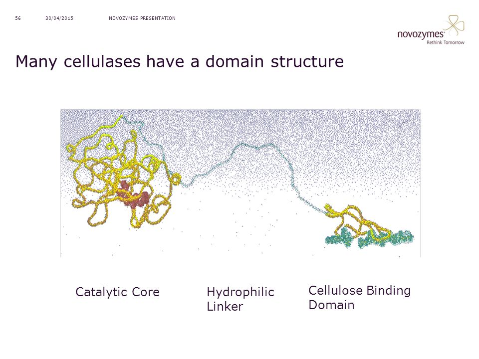 NOVOZYMES PRESENTATION30/04/201556 Many cellulases have a domain structure Catalytic Core Hydrophilic Linker Cellulose Binding Domain