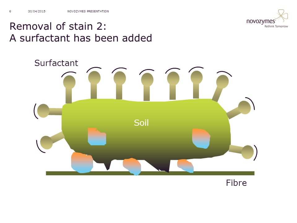 NOVOZYMES PRESENTATION30/04/20156 Removal of stain 2: A surfactant has been added Soil Fibre Surfactant